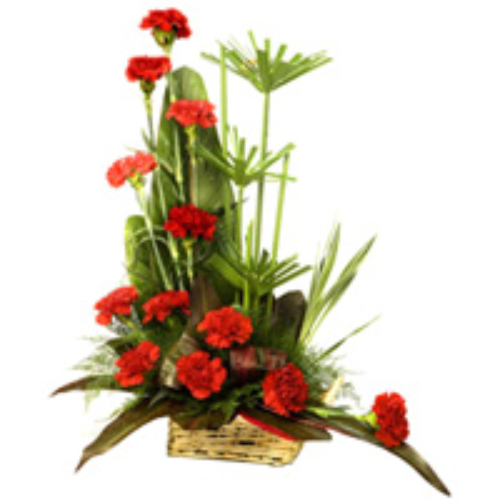 Dazzling One Dozen Carnations Carnival