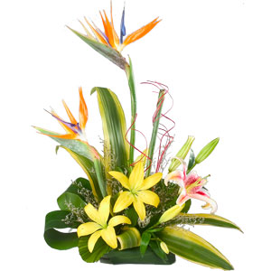 Touching Appealing Charm Arrangement of Lilies and Birds of Paradise