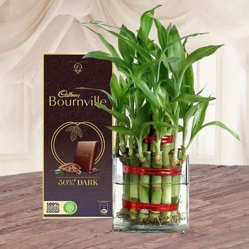 Gift of Lucky Bamboo Plant n Cadbury Chocolate