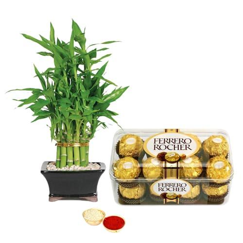 Delectable Ferrero Rocher Chocos N Bamboo Plant