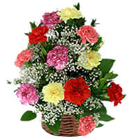 Radiant 15 Mixed Carnations Decked within a Basket