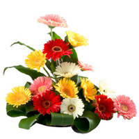 Gift of Mixed Gerberas Arrangement