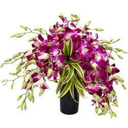 Gorgeous Orchids Display in Glass Vase