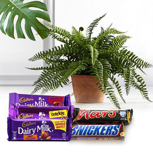 Splendid Gift of Air Purifier Plant N Chocolates