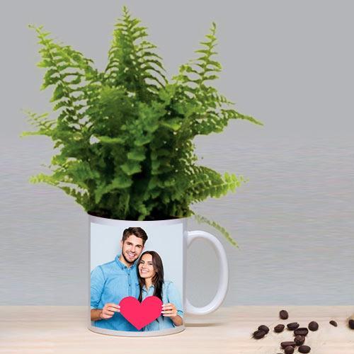 Decorative Gift of Bostern Fern Plant in a Coffee Mug
