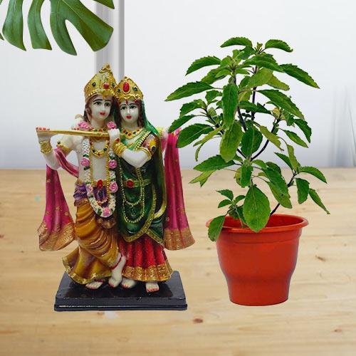 Good Luck Present of Holy Tulsi Plant N Radha Krishna Idol