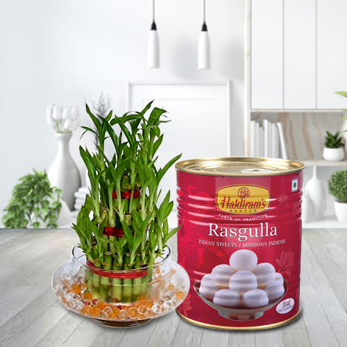 Two Layered Good Luck Bamboo Plant in Glass Pot with Haldiram Rasgulla