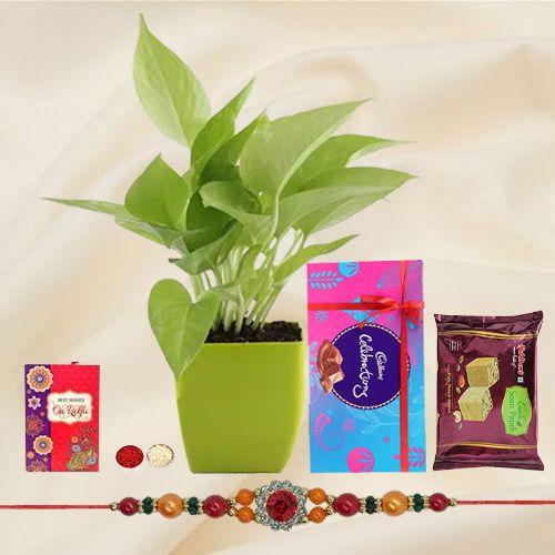 Send Rakshabandhan Gift of a Money Plant, Cadbury Chocolates, Haldiram Soan Papdi & a Rakhi